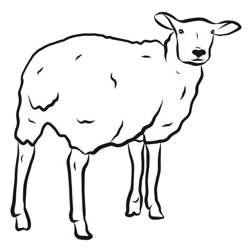 Bosquejo de pezuña de lana de oveja Transparent PNG