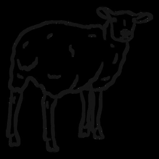 Sheep wool hoof sketch Transparent PNG