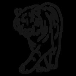 Bosquejo de rayas de tigre
