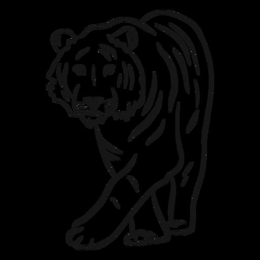 Bosquejo de rayas de tigre Transparent PNG