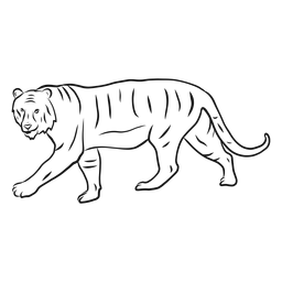 Bosquejo de rayas de cola de tigre