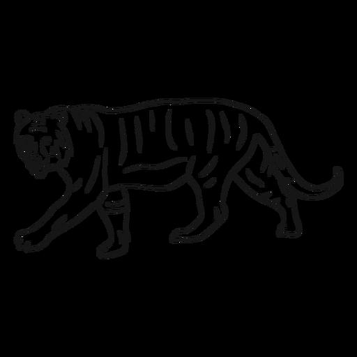 Tiger-Tail-Streifenskizze Transparent PNG