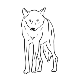 Wolf predator leg sketch
