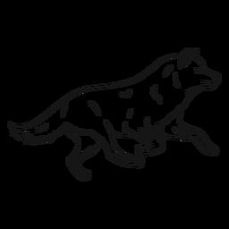 Bosquejo de pierna de cola de depredador lobo