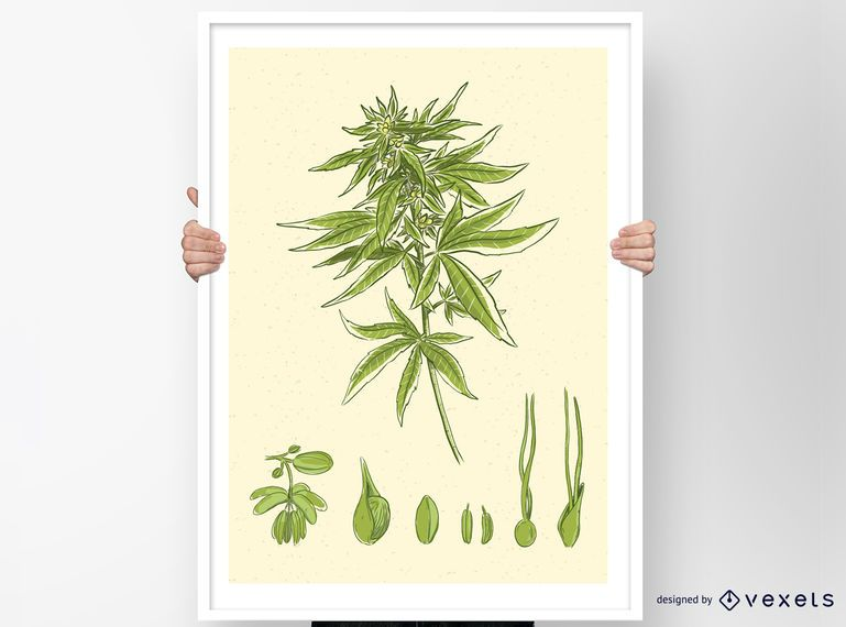 Cannabis Vector Design