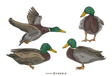 Conjunto de ilustração colorida de pato
