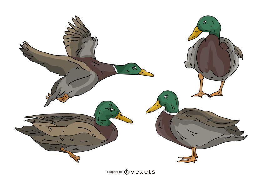 Conjunto de ilustración de color pato
