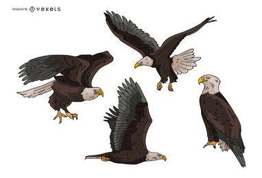 Conjunto de ilustração de águia