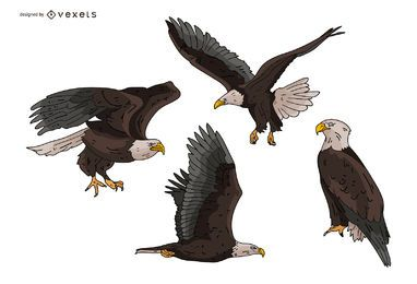 Eagle Illustration Set