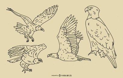 Conjunto de estilo de trazo de águila