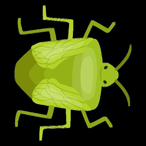 Bug bedbug chinch flat Transparent PNG