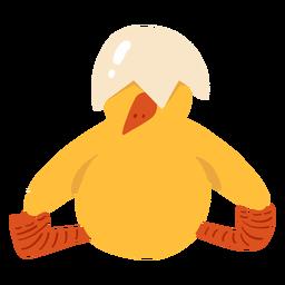 Chicken sitting beak shell flat