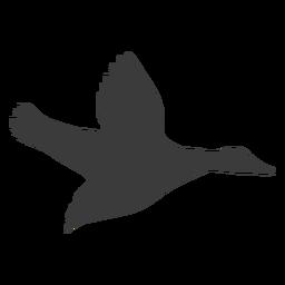 Drake duck wild duck beak wing silhouette