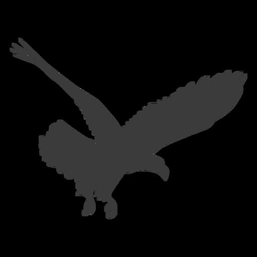 Eagle beak wing talon fly silhouette