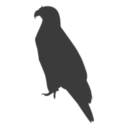 Eagle wing beak talon silhouette
