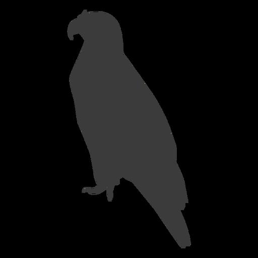 Eagle wing beak talon silhouette Transparent PNG