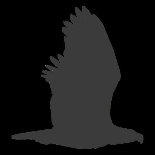 Eagle wing fly flying beak silhouette bird