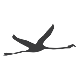 Flamingo pierna pico rosa mosca silueta ave