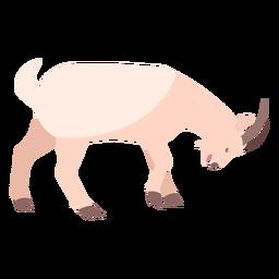 Goat hoof horn butt flat