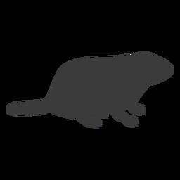 Marmota silhueta de focinho de porco