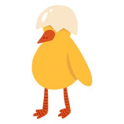 Bico de galinha de casca plana