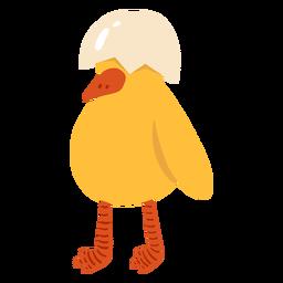 Cáscara de pollo pico plana