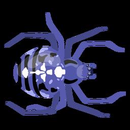 Perna de barriga de aranha plana