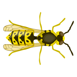 Wasp bee stripe wing flat