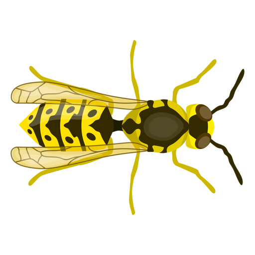 Wasp bee stripe wing flat Transparent PNG