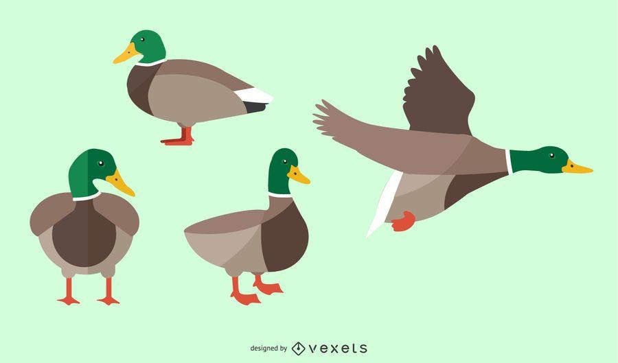 Conjunto de ilustração de pato liso