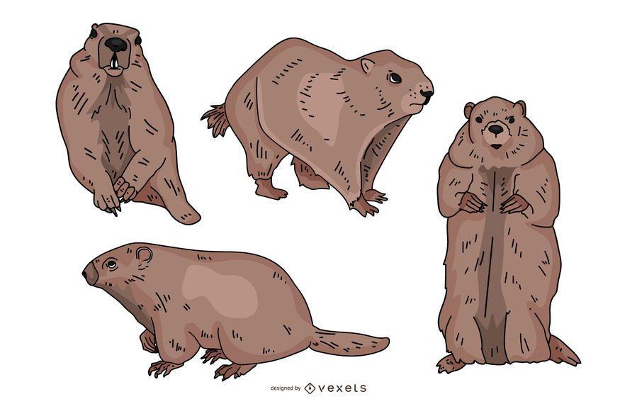 Groundhog Colored Illustration Set