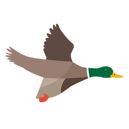Duck flying flat
