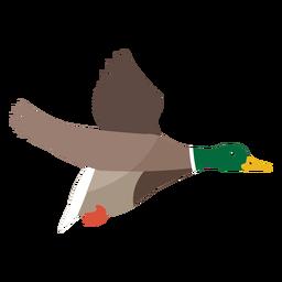 Ente fliegt flach