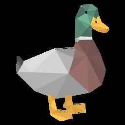 Pato baixo poli