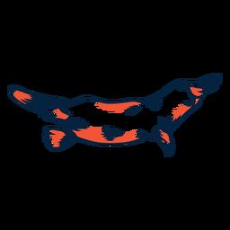 Duotone platypus swimming