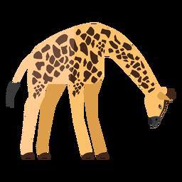 Giraffe, die flach schaut