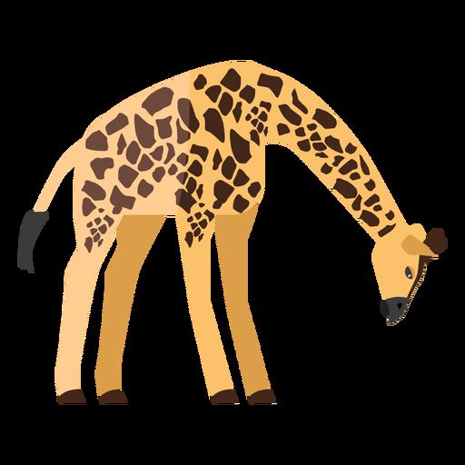 Giraffe looking down flat Transparent PNG