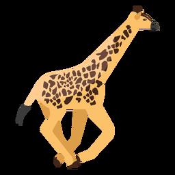 Giraffe läuft flach