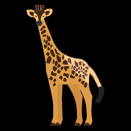 Giraffe side view flat Transparent PNG
