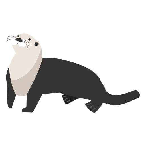 Sea otter looking up flat Transparent PNG