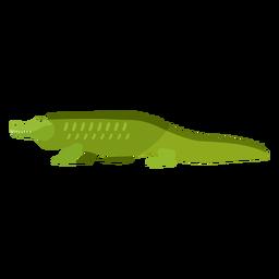 Jacaré crocodilo cauda fang plana