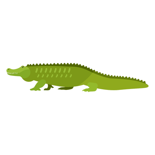 Colmillo de cola de cocodrilo de cocodrilo plano Transparent PNG