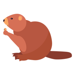 Beaver fat tail rodent flat