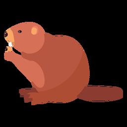 Castor gordo cola roedor plano