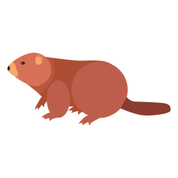 Beaver tail fat rodent flat