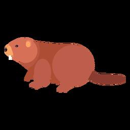 Cola de castor gordo roedor plano