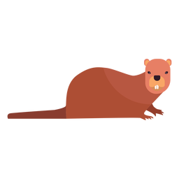 Castor diente gordo cola roedor plano