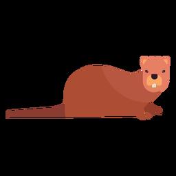 Roedor de cauda de dente castor plano roedor