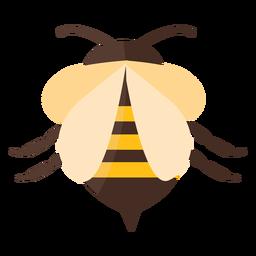 Bienenstichstreifenflügelwespe flach