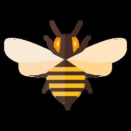 Bienenstreifen stachelflügelwespe flach